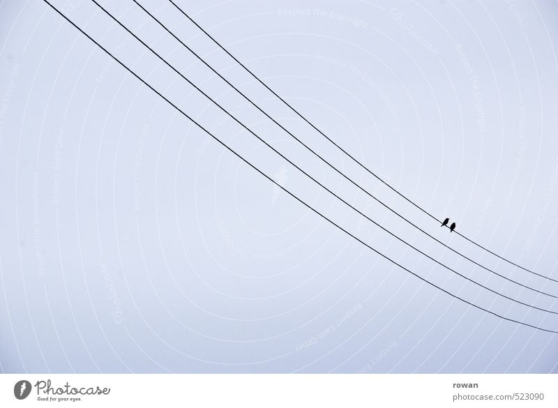 twosome Bird 2 Animal Pair of animals Cute Sympathy Friendship Together Love Infatuation Romance Cable Sit Couple Married couple Colour photo Exterior shot