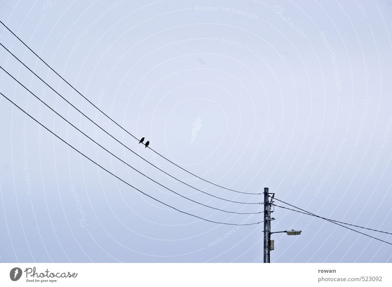 in twos Bird 2 Animal Pair of animals Together Sympathy Friendship Love Infatuation Loyalty Romance Couple Cable Electricity pylon Street lighting Colour photo