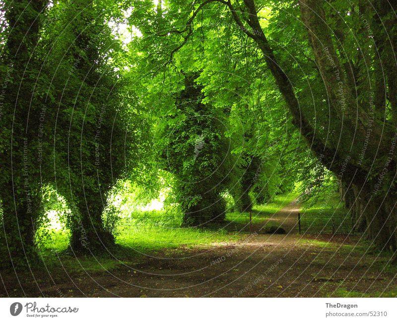 Tree Green Summer Calm Dark Relaxation Hope Island To go for a walk Peace Serene Tunnel England Avenue Gravel Ireland