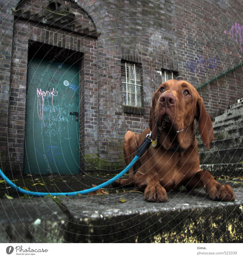 Ben looks Wall (barrier) Wall (building) Stairs Terrace Animal Pet Dog Dog lead 1 Graffiti Observe Lie Curiosity Trashy Town Brown Serene Patient Calm