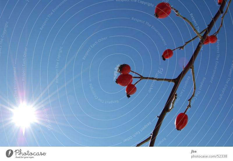 beautiful day Red Plant White Lighting Radiation Sun Branch Sky Blue