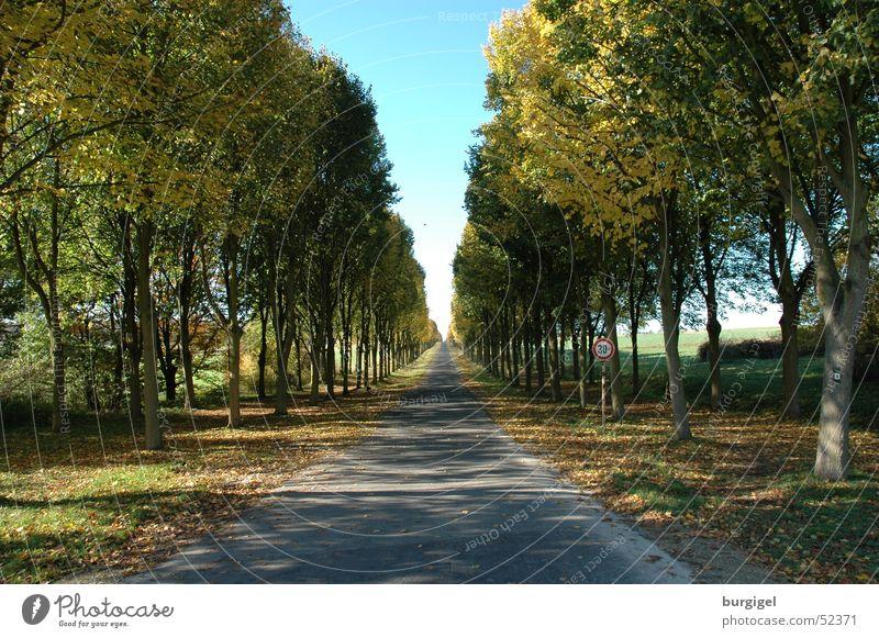 Tree Street Lanes & trails Avenue