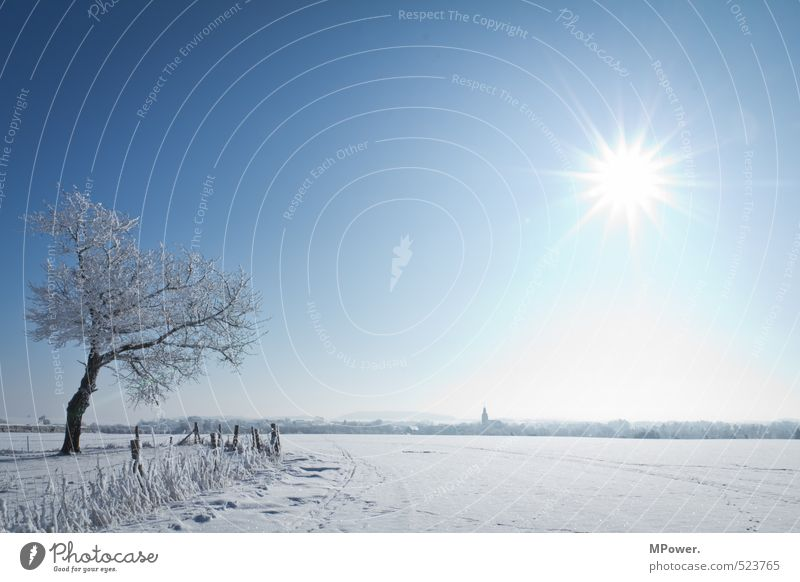 Nature Blue Water White Sun Tree Landscape Far-off places Winter Cold Environment Snow Bright Horizon Ice Field
