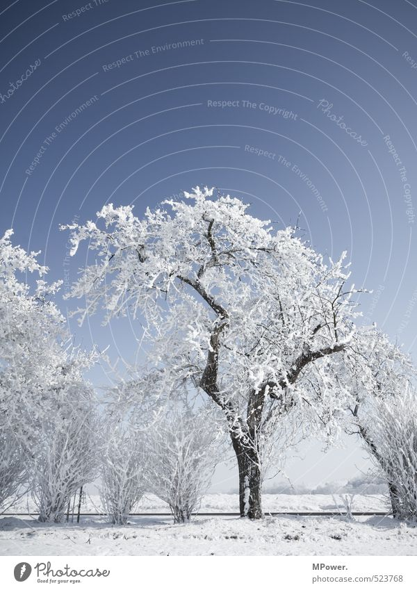 crystallize II Environment Nature Landscape Water Climate Beautiful weather Ice Frost Snow Blossoming Bright Cool (slang) Snowscape Tree Bushes Frozen Cold