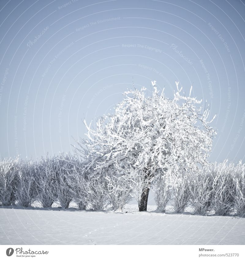 Nature Blue Water White Tree Landscape Winter Cold Environment Snow Bright Ice Field Bushes Blossoming Climate