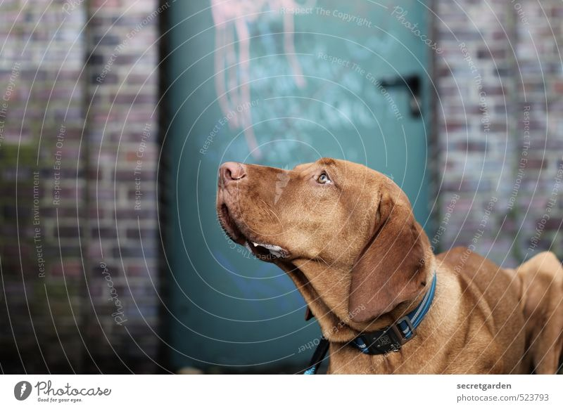 faithful look. Wall (barrier) Wall (building) Door Animal Pet Dog 1 Blue Brown Trust Love of animals Patient Calm Curiosity Resolve Loyalty Looking up reward