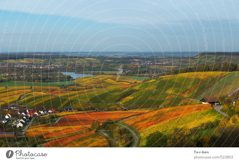 Vineyards drifting colourful Nature Landscape Sky Horizon Autumn Field To enjoy Dream Hiking Happiness Infinity Yellow Gold Orange Red Colour photo