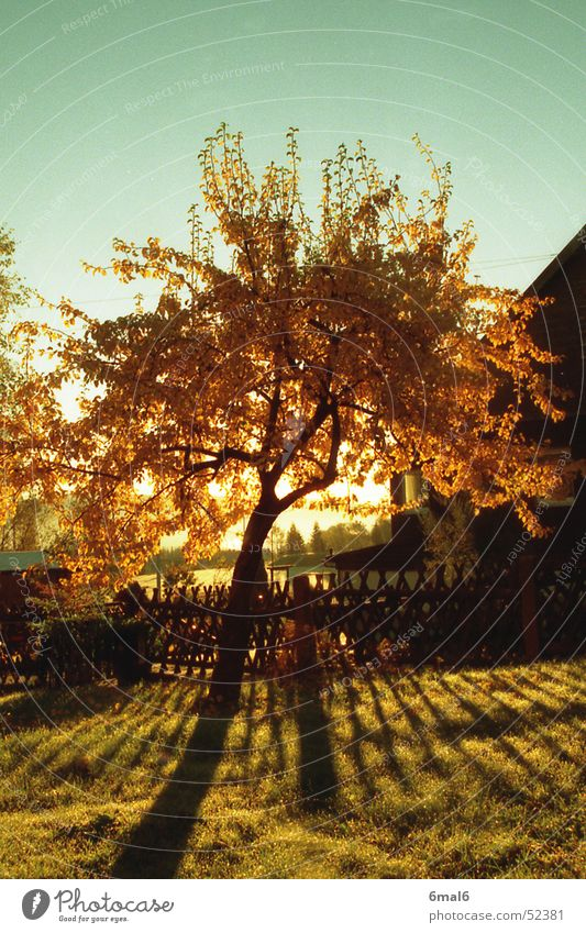 Pear tree in autumn Tree Autumn Wood Leaf Meadow Sun Warmth Shadow Garden Fruit Sky Nature Landscape