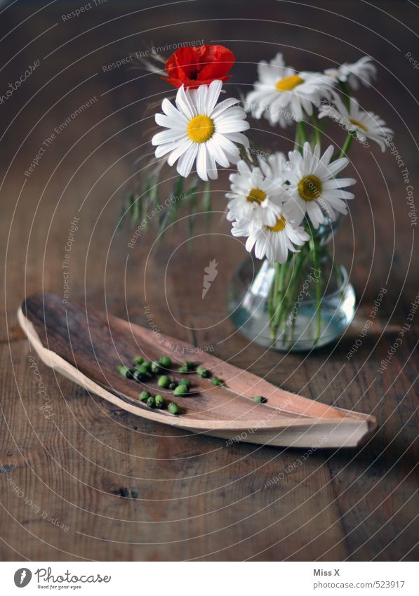 Flower Blossom Decoration Table Blossoming Bouquet Poppy Fragrance Still Life Bowl Seed Marguerite Faded Wooden table To dry up Poppy blossom