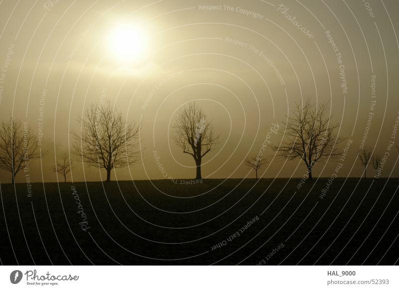 January-Sun Tree Fog Cold Black White Ochre Brown Winter Autumn Sky Landscape Branch Graffiti Floor covering