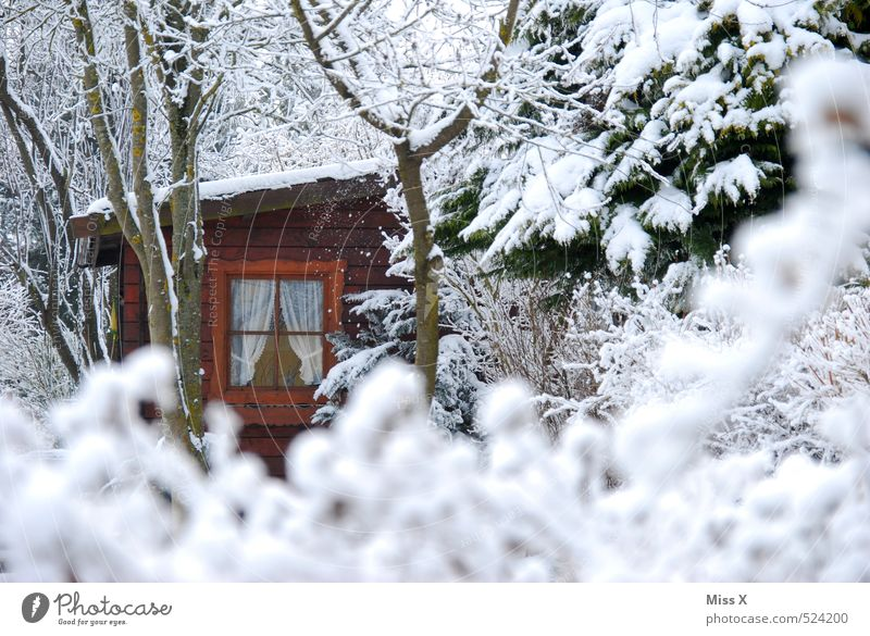 forest hut Environment Nature Winter Ice Frost Snow Snowfall Tree Bushes Garden Forest Hut Window Cold White Idyll Garden plot Gardenhouse refuge