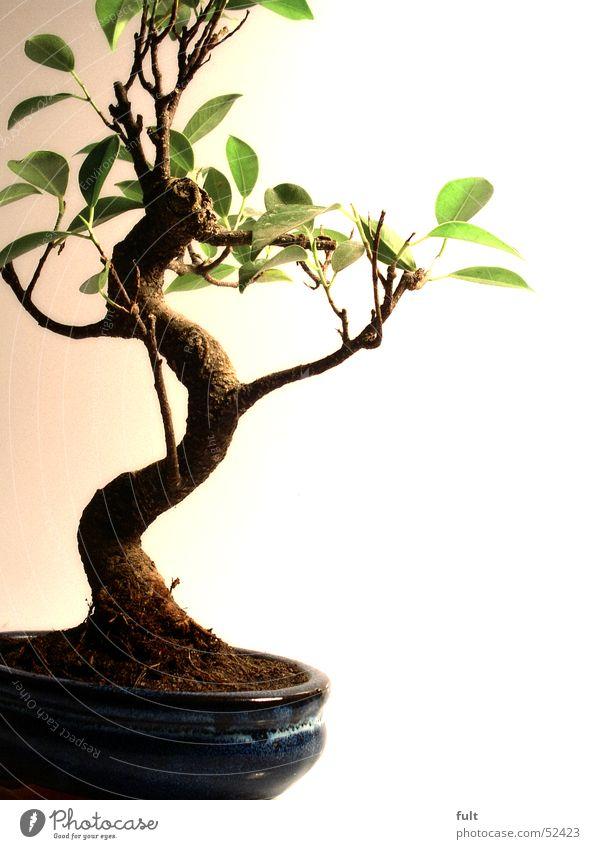 Nature Tree Plant Calm Leaf Art Small Earth Tree trunk Adornment Bonsar
