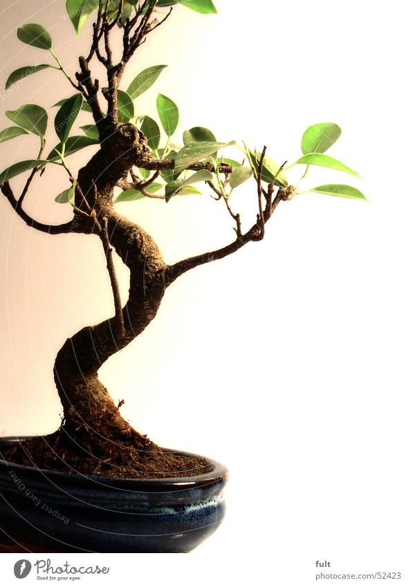 Nature Tree Plant Calm Leaf Art Small Earth Tree trunk Adornment Bonsar