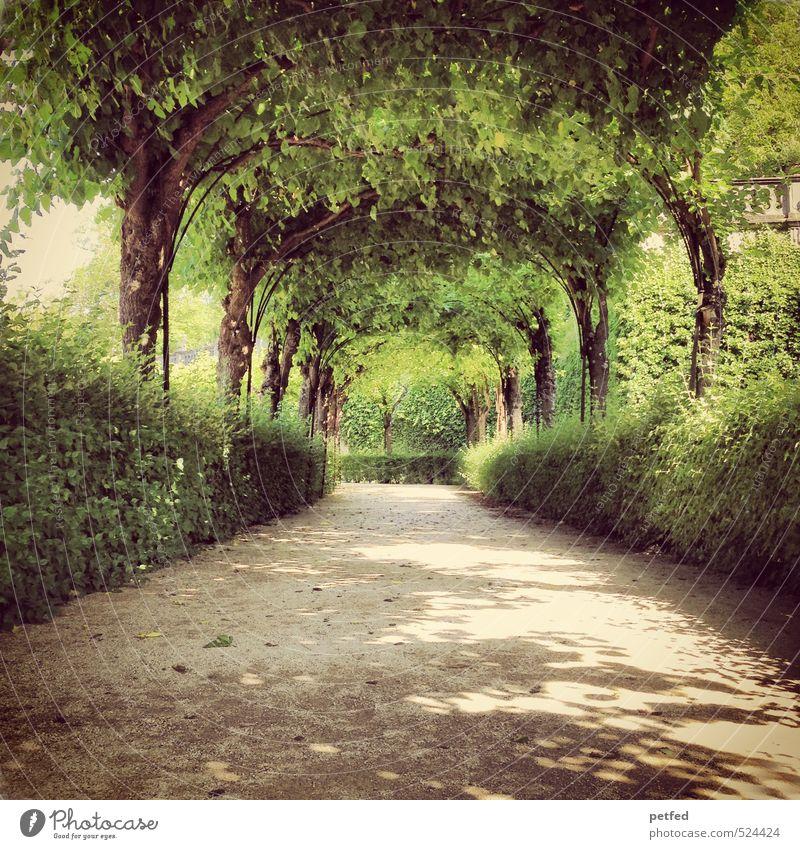 Green Summer Tree Loneliness Warmth Love Garden Dream Art Brown Park Leisure and hobbies Idyll Elegant Large Design