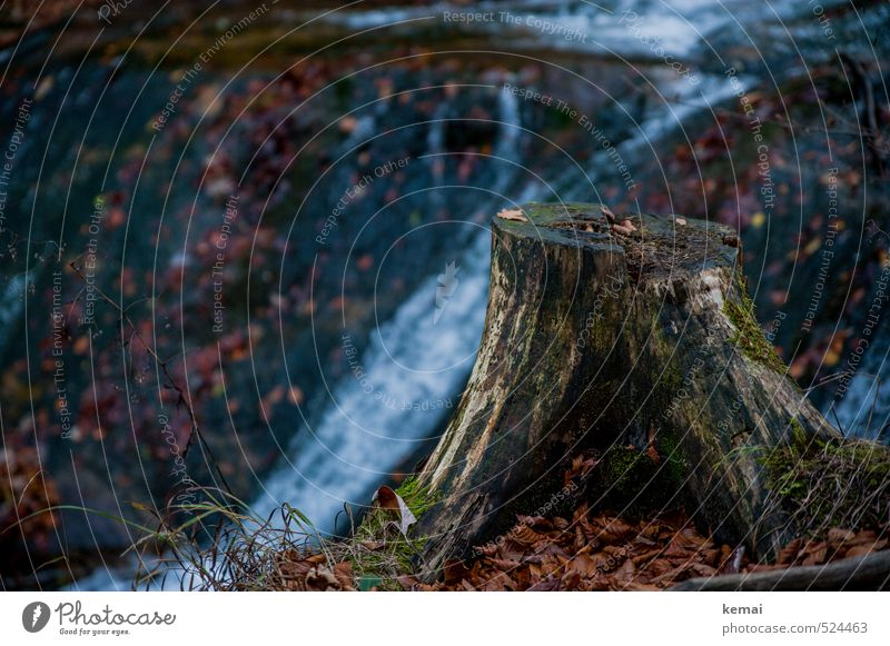 Nature Old Water Plant Tree Landscape Leaf Forest Dark Environment Autumn Natural Wet Brook Moss Damp