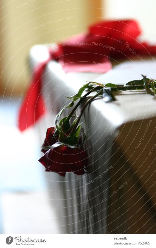 Red Flower Leaf Loneliness Blossom Sadness Lie Table Grief Rose End Longing Dry Blossoming Pain Brave