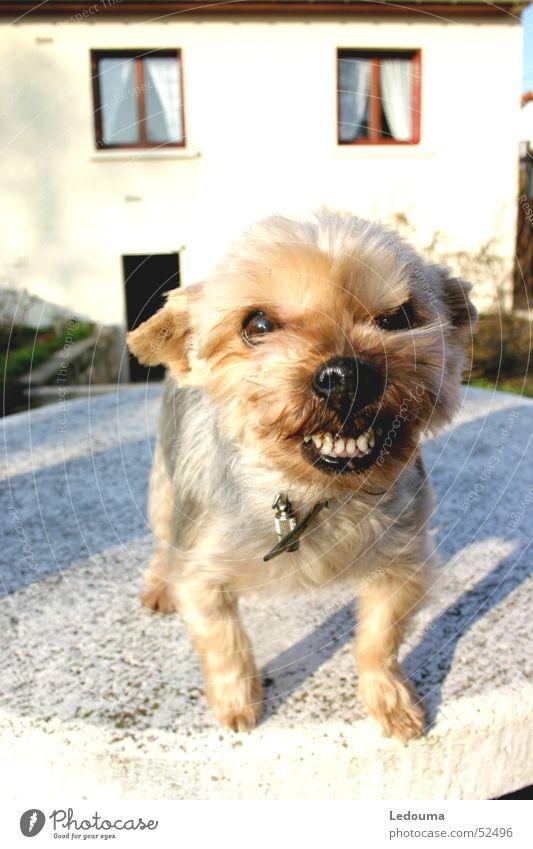 Dog Set of teeth Respect Snout Attack Animal Grrr