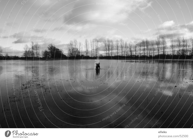 Land under dog Meadow Clouds Dog Wide angle Rainwater Tree Midday Spreewald Water Sky spieglung Black & white photo eos 350d elleks alexander lux Deluge