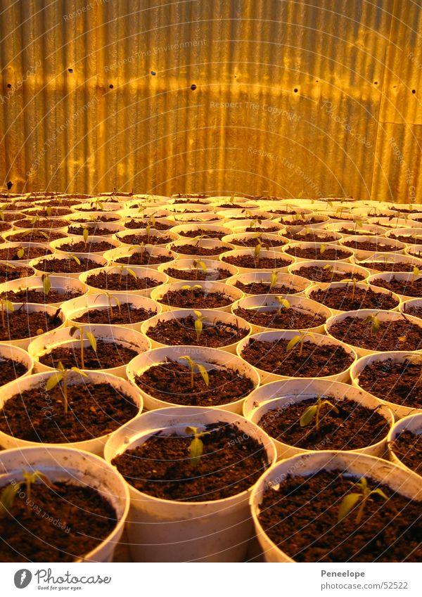 Plant Small Multiple Many Tree nursery Sapling Flowerpot Greenhouse Cucumber Market garden