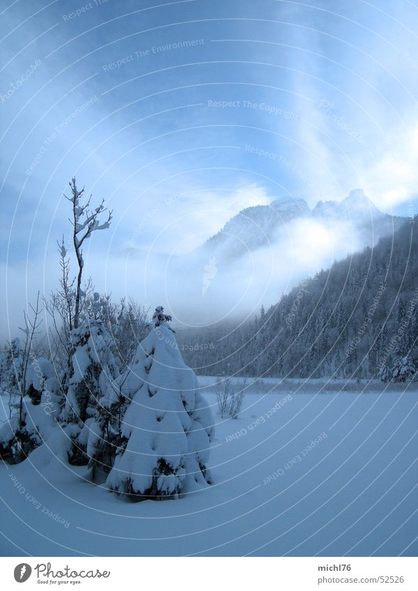 A little fir tree stood in the fog Tourism Freedom Winter Snow Winter vacation Mountain Nature Landscape Sky Clouds Fog Ice Frost Tree Forest Alps feet Bavaria