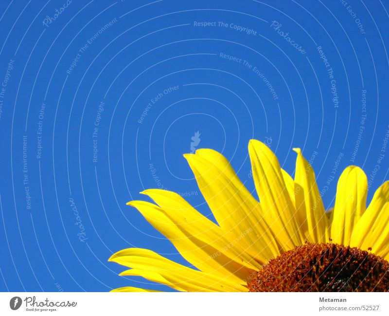 Nature Sky Blue Summer Yellow Garden Warmth Lighting Fresh Physics Sunflower
