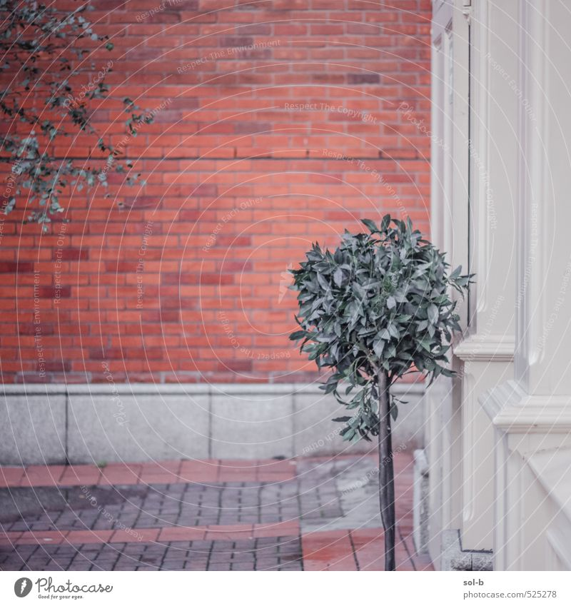 Small tree City Plant Tree Loneliness House (Residential Structure) Wall (building) Wall (barrier) Architecture Building Style Facade Elegant City life