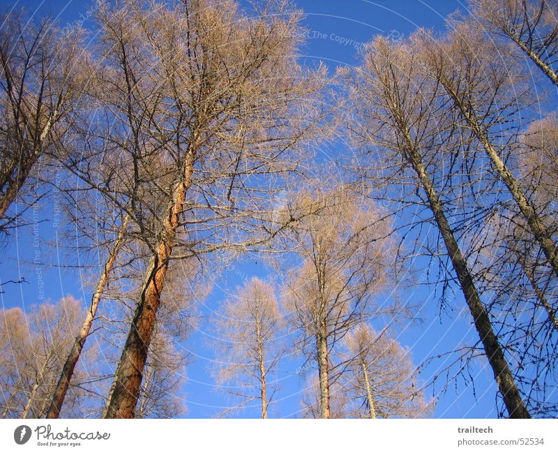 Winter Forest Light Tree Leaf Fir tree Sun Branch Sky
