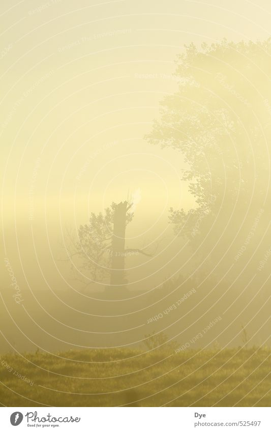 foggy Landscape Fog Wild plant Field Cold Moody Calm Cleanliness Dawn Morning fog Tree trunk Treetop Twilight Unclear Closed Covered Colour photo Exterior shot