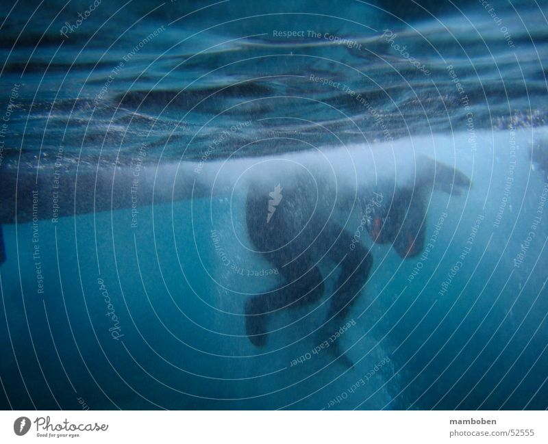 Human being Ocean Feet Waves Swimming & Bathing Dive Aquatics White crest Snorkeling Water Neoprene