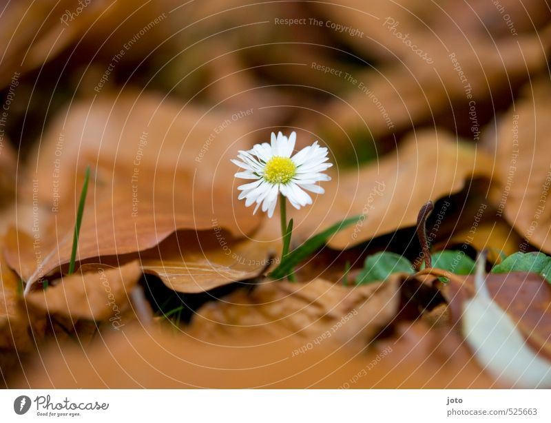 Nature Plant Flower Loneliness Environment Life Autumn Meadow Garden Growth Power Blossoming Transience Uniqueness Cute Change