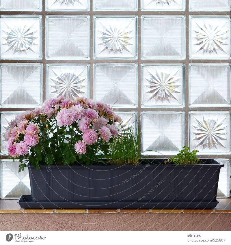 Balcony Deco Plant Spring Summer Autumn Flower Blossom Pot plant Detached house Wall (barrier) Wall (building) Window board Glass block Beautiful Kitsch Gloomy