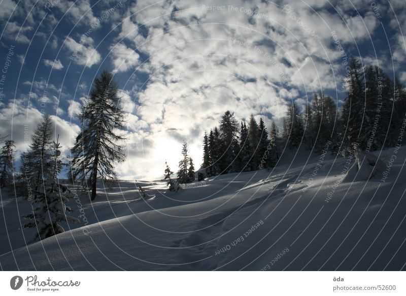 Sky Tree Sun Winter Clouds Cold Snow Deep snow