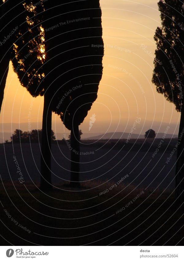 Tree Sun Tuscany
