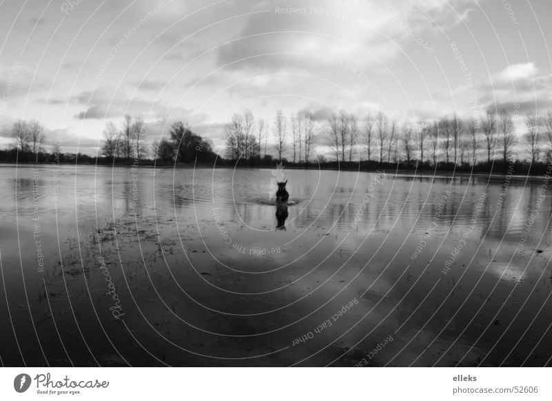 Water Sky White Black Clouds Far-off places Cold Meadow Dog Mirror Attack Monochrome Brandenburg Spreewald