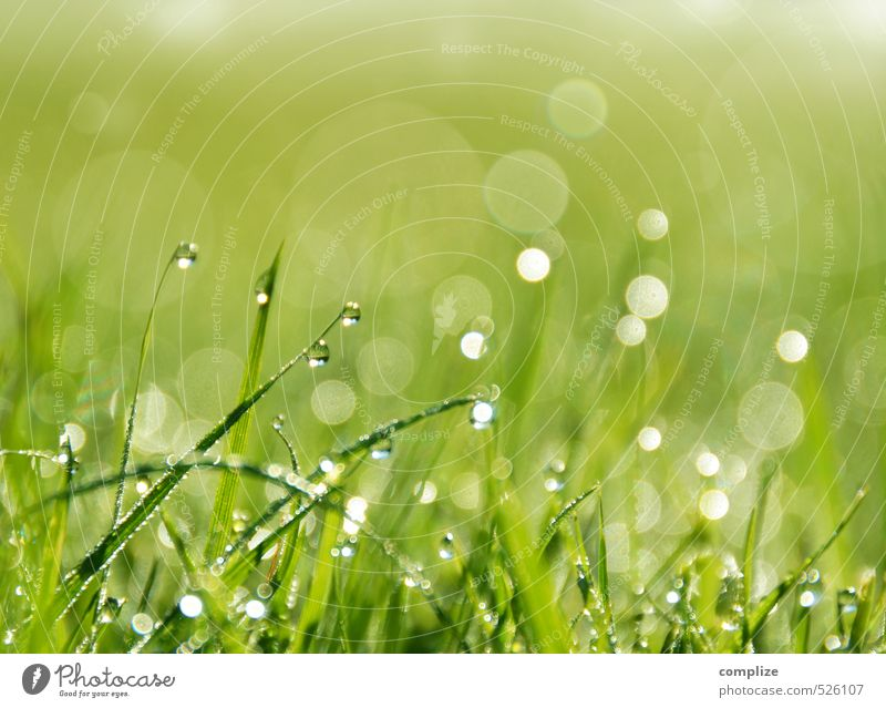 Nature Green Water Plant Sun Environment Meadow Grass Garden Background picture Rain Park Field Glittering Climate Bushes