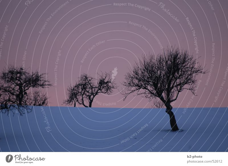 Sky Tree Blue Red Winter Cold Snow Landscape Frost Branch Tree trunk Twig Pastel tone Fruit trees