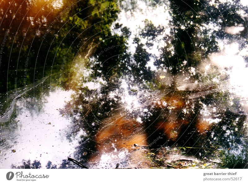 pollution Reflection Tree Puddle Pond Water Colour Oil