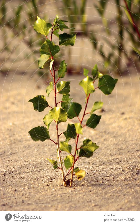 plant Plant Leaf Growth Nature Sand