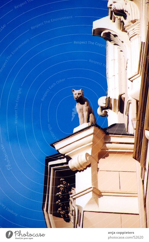 Kitty watch Cat Art nouveau Latvia Riga Sky Statue built blue Architecture