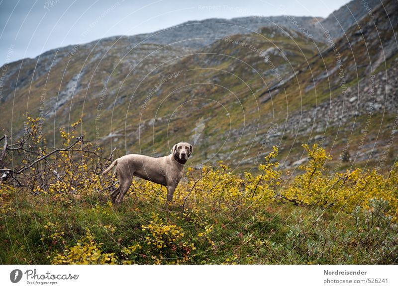 come loose Hunting Adventure Far-off places Freedom Mountain Hiking Landscape Plant Animal Weather Bad weather Rain Dog 1 Observe Fitness Muscular Curiosity