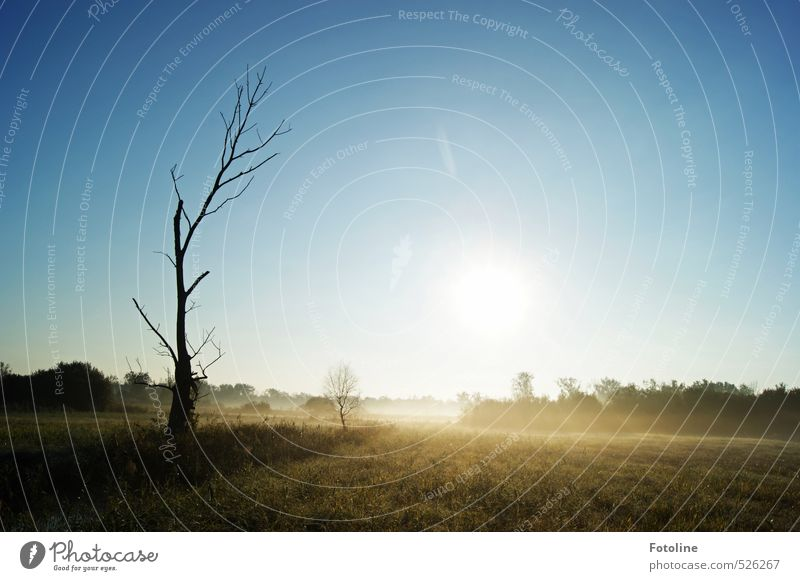 777 It's getting frosty now. Environment Nature Landscape Plant Sky Cloudless sky Sun Autumn Tree Meadow Field Bright Cold Natural Blue Black White Colour photo