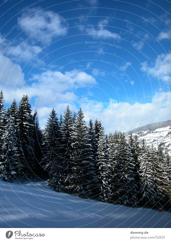 ski-bound Skis Driving White Clouds Steep Fir tree Tree Austria Federal State of Styria Mount Kreischberg Blue Sky Sun Ski run Snow