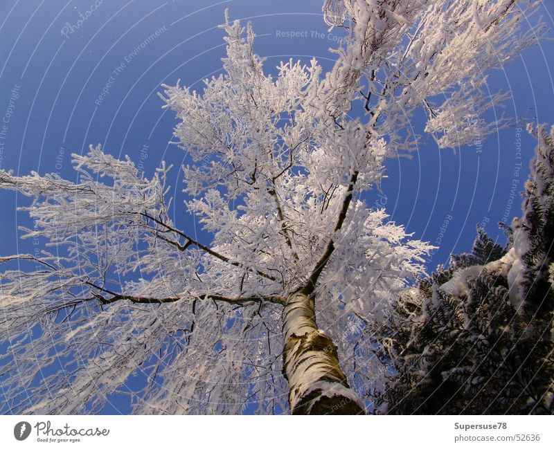 Sky White Tree Blue Winter Snow Ice Birch tree