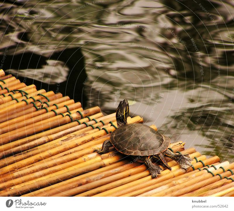 Water Neck Wanderlust Reptiles Bamboo stick Turtle Armor-plated Painted frog Mainau island
