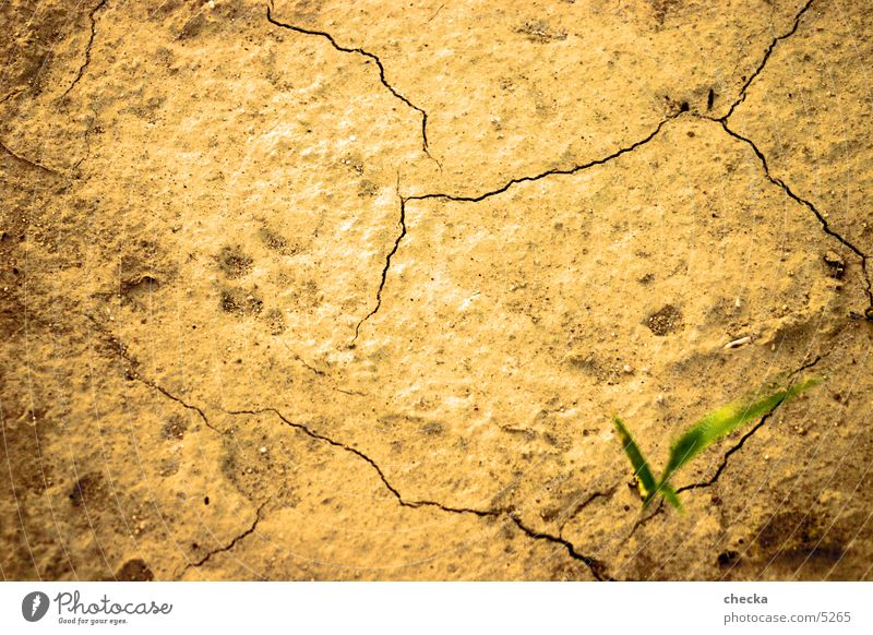 Earth Floor covering Desert Dry Crack & Rip & Tear Badlands Subsoil