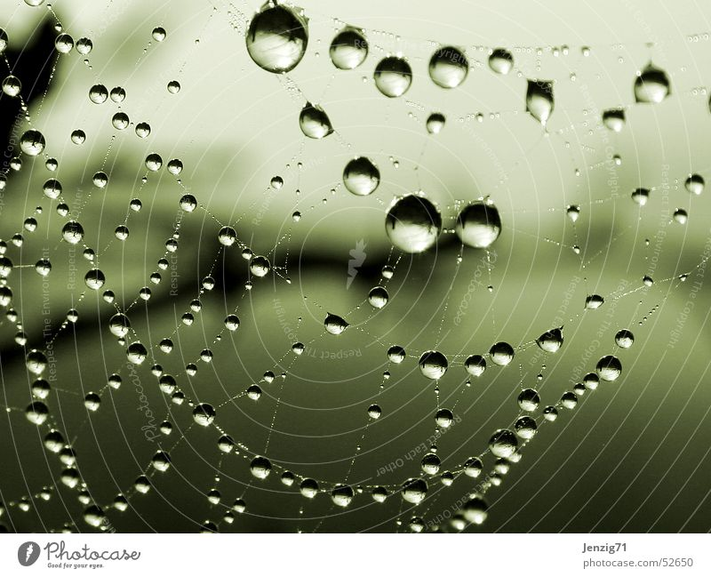 Water Autumn Rain Fog Drops of water Rope Net Spider Morning Spider's web