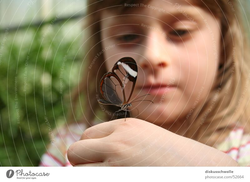 Child Nature Insect Butterfly