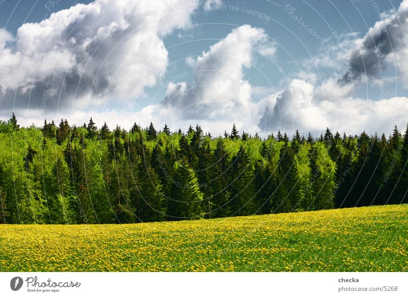 Nature Clouds Forest Meadow Landscape Baden-Wuerttemberg Swabian Jura
