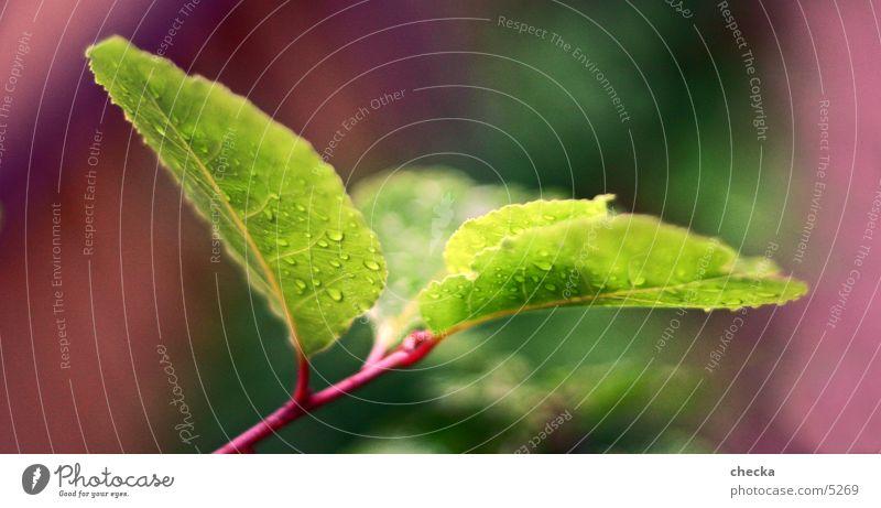 Fresh Leaf Green Plant Drops of water