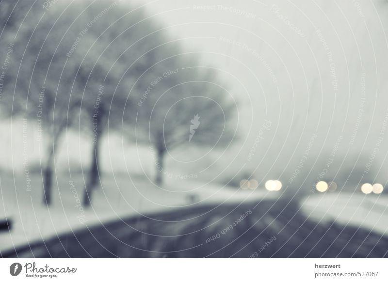 Calm Winter Snow Snowfall Weather